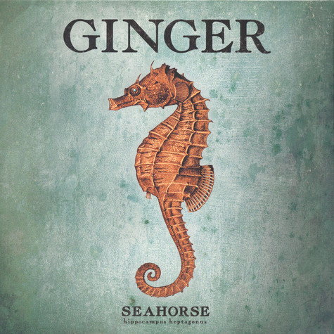 Ginger - Seahorse