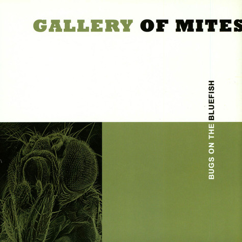 Gallery Of Mites - Bugs On The Bluefish
